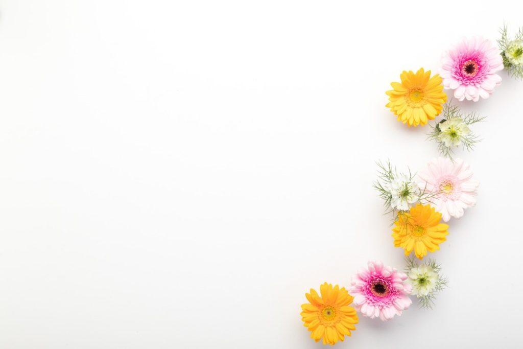白いバックグラウンドの前にある花  自動的に生成された説明