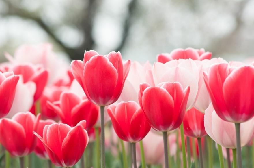ピンクの花  自動的に生成された説明