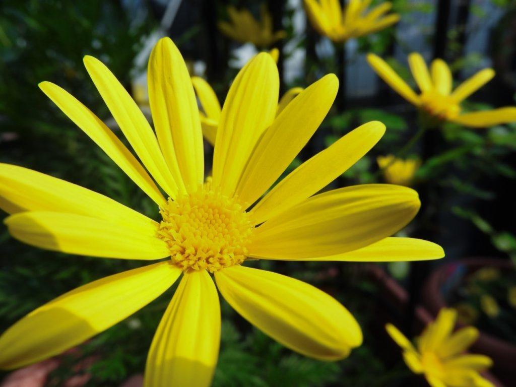花が咲いている  自動的に生成された説明