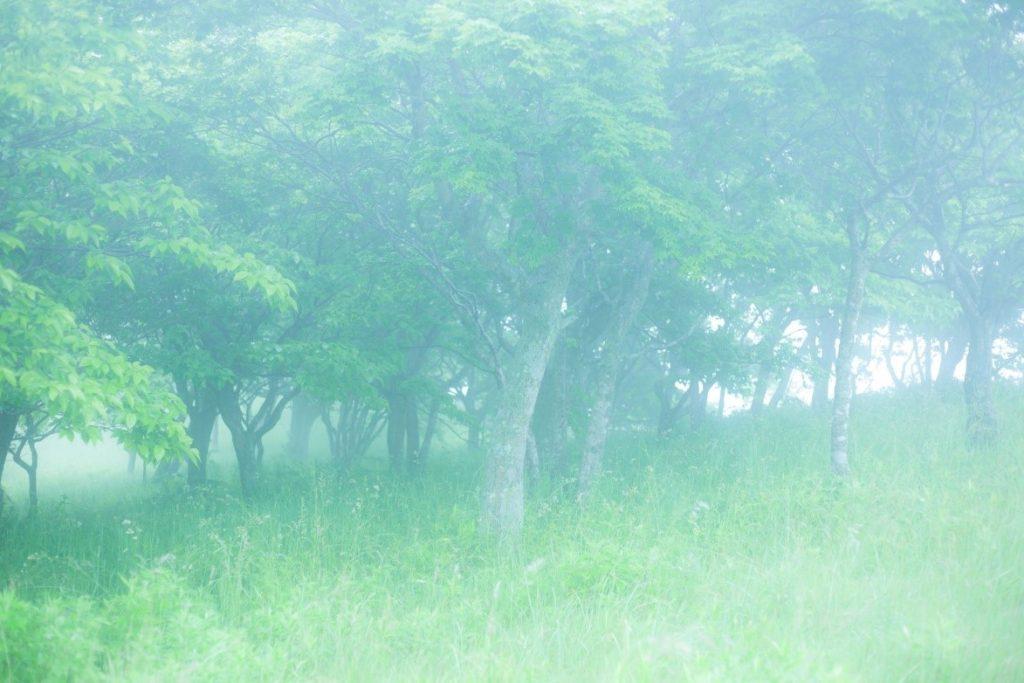 草, 屋外, フィールド, グリーン が含まれている画像  自動的に生成された説明