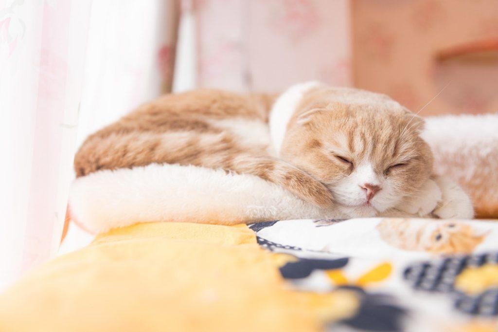 ベッドで寝ている猫  自動的に生成された説明