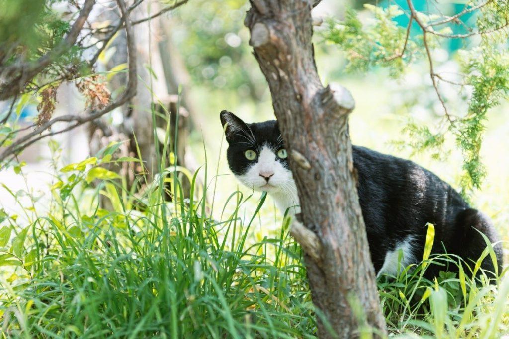 茂みにいる猫  自動的に生成された説明