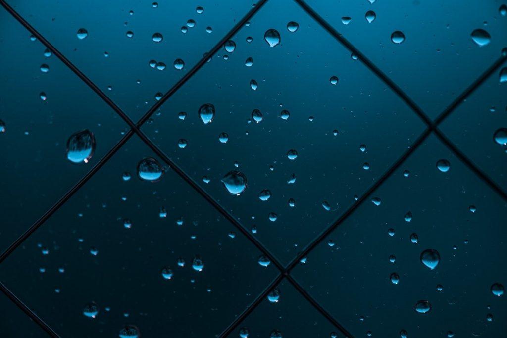 雨, 自然, 犬, 座る が含まれている画像  自動的に生成された説明