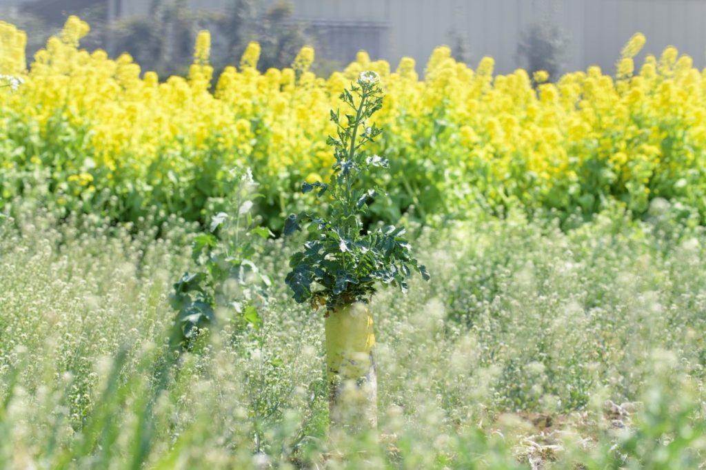 草, 工場, 屋外, 花 が含まれている画像  自動的に生成された説明