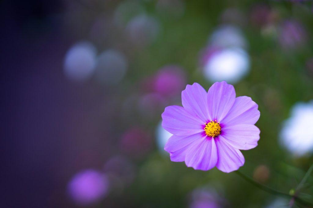 花のデザイン  自動的に生成された説明