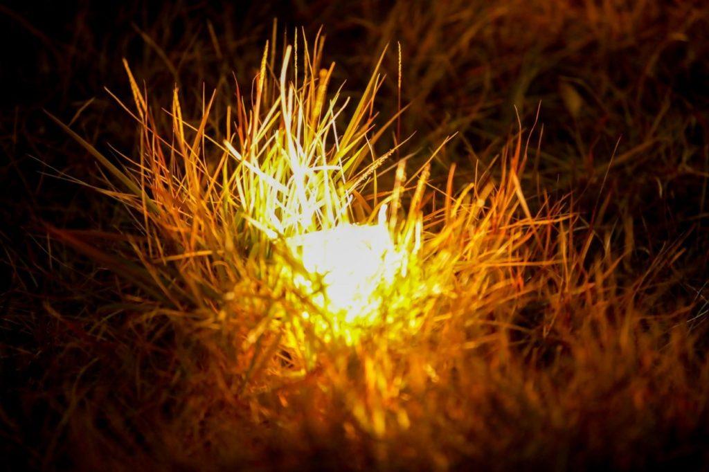 花火, 草 が含まれている画像  自動的に生成された説明